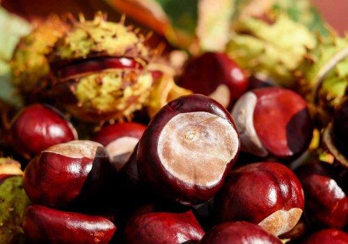 Ερώτηση για τα προβλήματα των καστανοπαραγωγών της Πιερίας